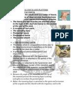 Deep Cervical Fascia and Platysma