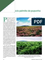 O agronegócio palmito de pupunha