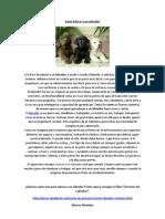 Cómo Educar a un Labrador