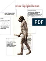 master homo erectus detailed input 2
