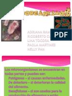 Expo Microorganismos