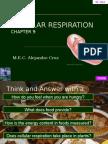 Mr. Cruz Cellular Respiration Ch 9