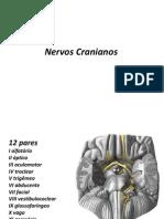 Nervos Cranianos[1] Anatomia