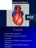 Anatomia Card 011