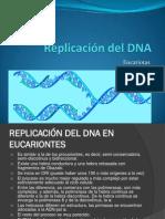 7-ReplicaciondelDNA3Eucariotas