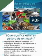 animalesenpeligrodeextincinenpuertorico-110406182611-phpapp02