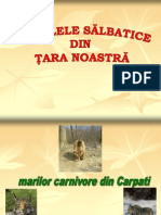 Animale Salbatice Din Romania (1)