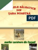 Animale Salbatice Din Romania (1)