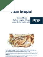 Modulo 2 - Plexo Braquial Equino