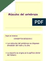 Modulo 2 - Región del Antebrazo