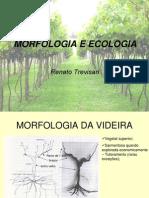 2a Morfologia Videira