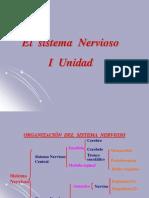 impulso-nervioso1