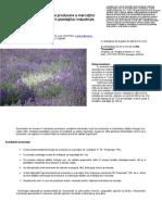 Rezult 2009 Proiect Levantica Maricica[1]