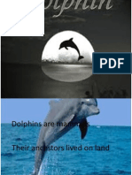 About Dolphin