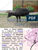 About Anoa