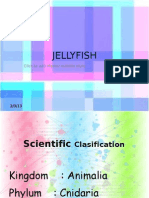 About Jellyfish