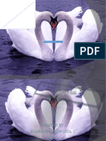 About Swan
