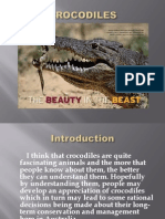 About Crocodile