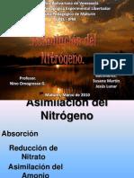 Presentación Ciclo del Nitrogeno