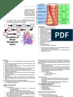 Cardiac Function