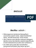 Copy of Bacillus