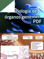 89892438 Embriologia de Aparato Reproductor Femenino