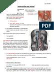 04-29_vascularizacion e Inervacion Del Perine