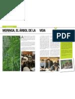 MORINGA.pdf