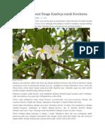 Manfaat Dan Khasiat Bunga Kamboja Untuk Kesehatan