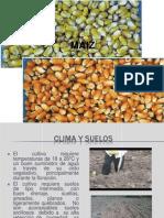 Maiz Agricultura