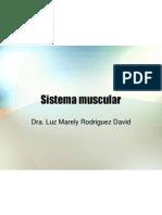 sistema muscular1
