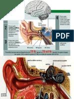 Perda Auditiva - Anatomia Do Ouvido