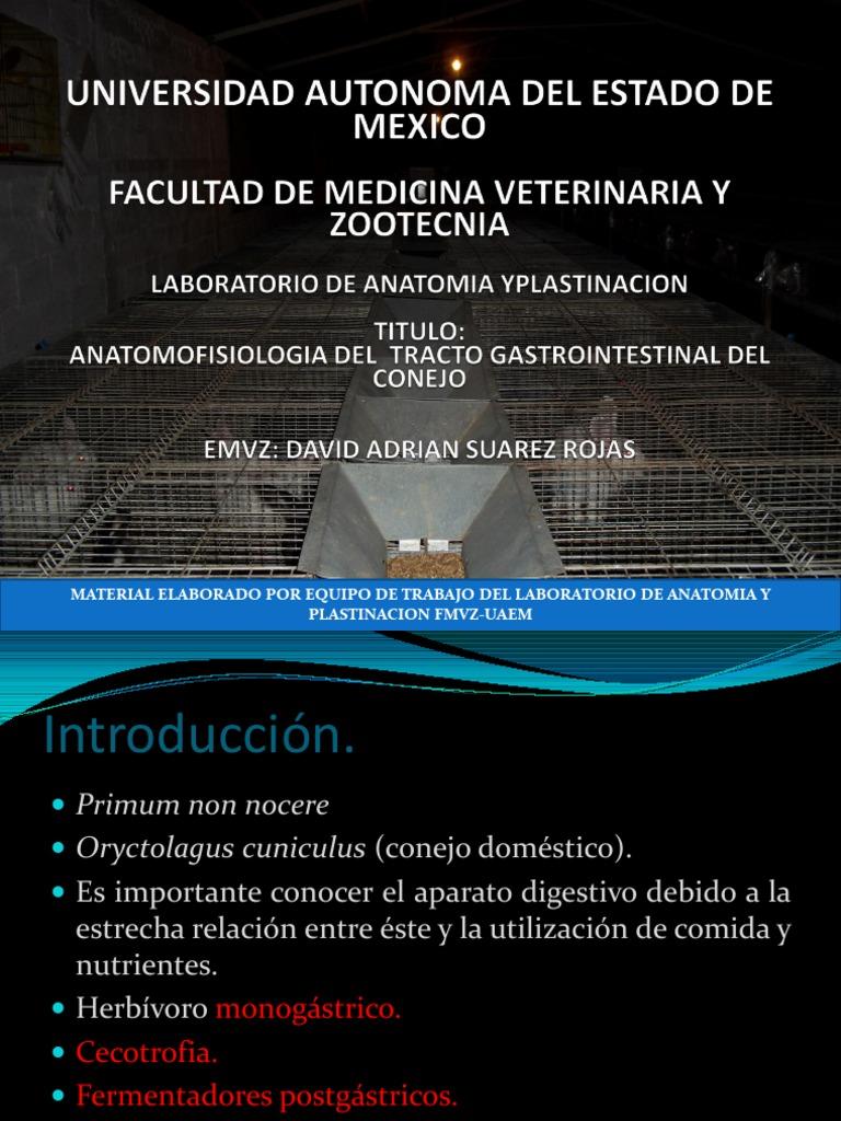 Anatomia Del Tracto Gastrointestinal Del Conejo