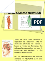 Tipos de Sistema Nervioso
