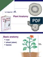 Ch 35 Plant Anatomy