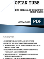 Fallopian Tube Presentation