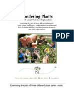 1 St Pondering Plants 2012
