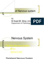 Disease of Nervous System Lect 2