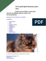 Los Gatos Son La Principal Amenaza Para La Vida Silvestre
