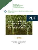 Guia Ilustrada de Gramineas de pR