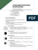 09 - Phylum Sarcomastigophora, Subphylum Sarcodina