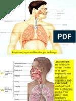 20-respiratory-system-1213122391845246-9