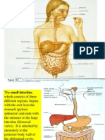 22-digestive-system-2-1216341714240163-8