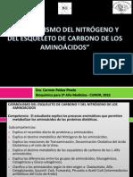 03+METAB+AMINOACIDOS