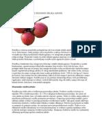 Rezidba i Formiranje Uzgojnog Oblika Jabuke