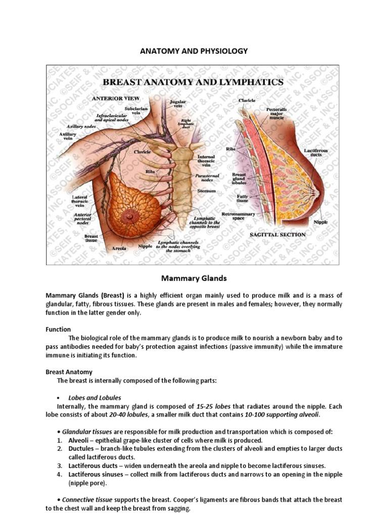 Erfreut Newborn Anatomy And Physiology Ideen - Menschliche Anatomie ...