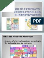 CHE 40 A- Major Metabolic Pathways.PDF