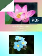 vivo_B23
