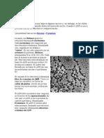 Cromatina y Cariotipo