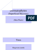 2 B Dermatophytes